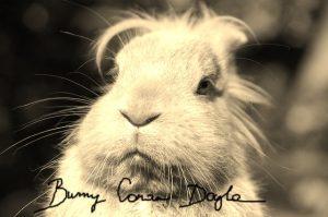 Bunny Conan Doyle