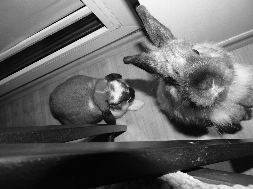 Bazyl i Kokos w kamerze Banku Marchewkowego. (fot. by Beata)