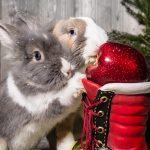Zorganizowana grupa elfów przynosi prezenty ubogim zwierzakom