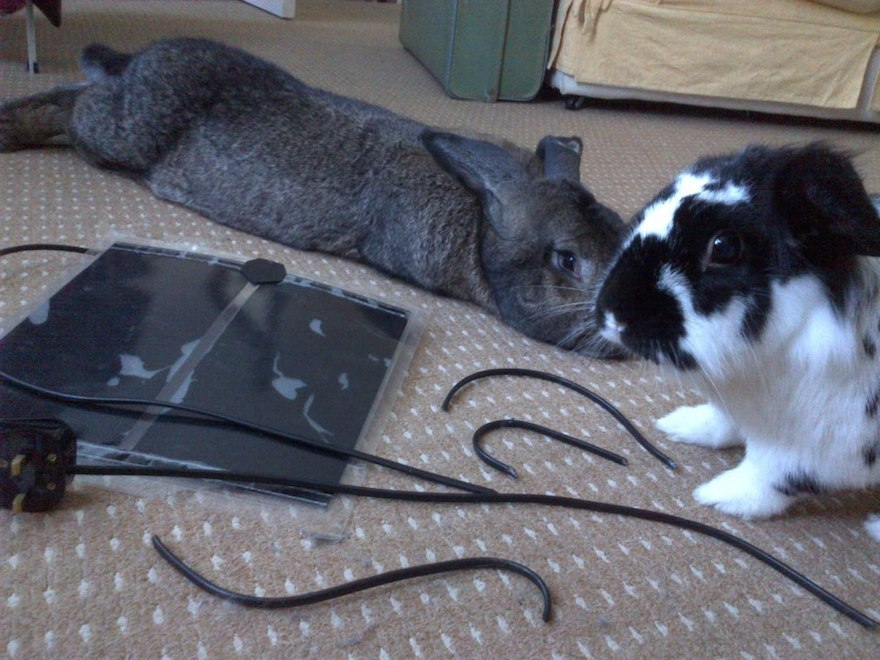 Tak, przegryźliśmy kabel. Masz jakiś problem? (źródło: tumblr.com)