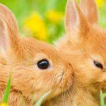 W Buraczkowie otworzyła się  szkoła dla małych królików
